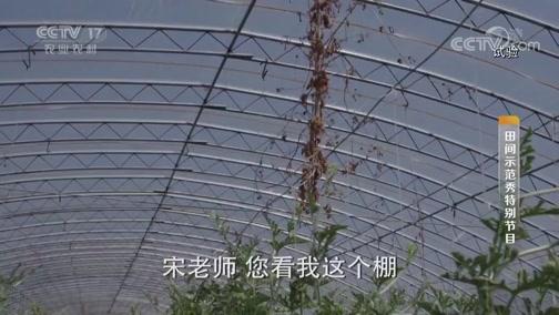 《田间示范秀》 20190813 瓜王不自夸 全凭瓜当家
