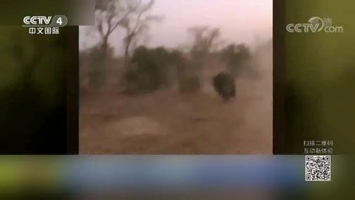 [中国新闻]南非:犀牛紧追游客 司机猛踩油门逃生