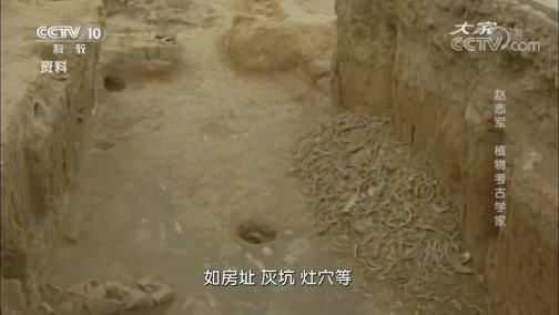 《大家》 20190911 植物考古学家 赵志军