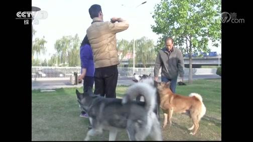 《生活提示》 20190919 狂犬病可怕 但可预防