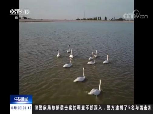 [午夜新闻]新疆 玛纳斯湿地公园迎来候鸟迁徙高峰