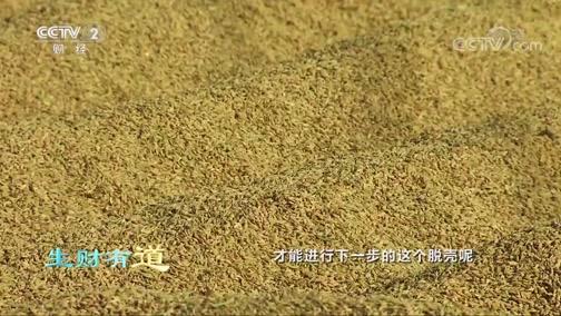 [生财有道]晒稻子也有大讲究 含水量检测必不可少