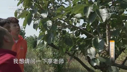 《田间示范秀》 20191112 金秋甜柿熟