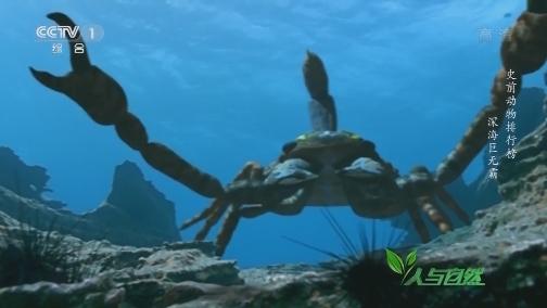 [人与自然]史前海蝎身长可达2米 体重是现代蝎子的1000倍!
