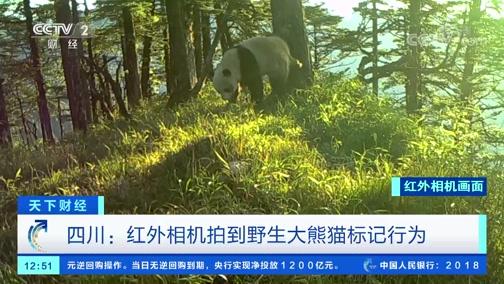 [世界财经]四川:红外相机拍到野生大年夜熊猫标记行动