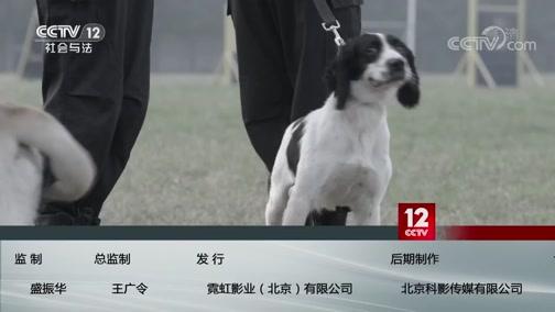 《方圆剧阵》 20191214 警花与警犬·初遇(精编版)上集