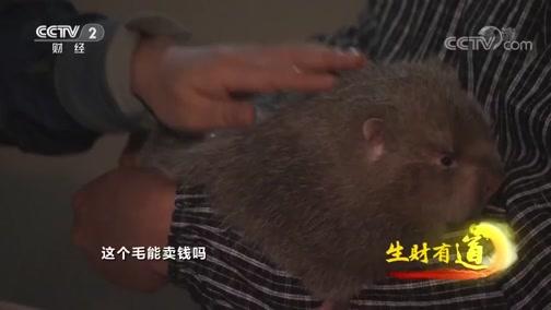 《生财有道》 20200103 广西鹿寨:生态山林湖 条条生财路
