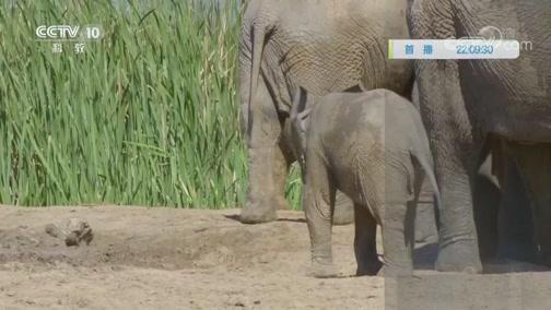 《自然传奇》 20200114 非洲代言象