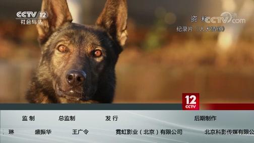 《方圆剧阵》 20200120 警花与警犬·守护(精编版)第三集