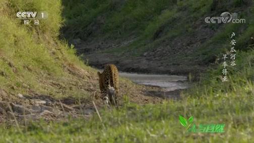 《人与自然》 20200122 卢安瓜河谷——旱季将至