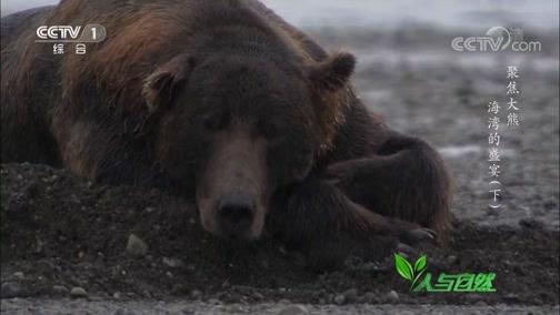 《人与自然》 20200204 聚焦大熊——海湾的盛宴(下)