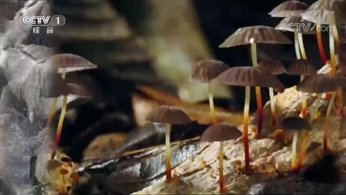 《人与自然》 20200211 加勒比漫步——生命的热土