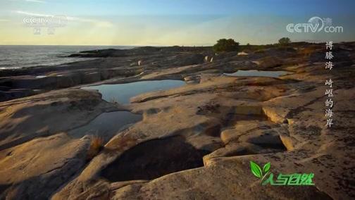 《人与自然》 20200214 博滕海——崎岖的海岸