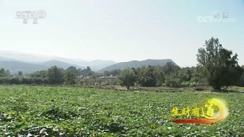 《生财有道》 20200303 云南勐海:见人见物见生活 边境小寨收获多