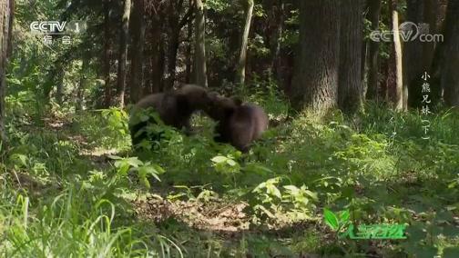 《人与自然》 20200308 小熊兄妹(下)