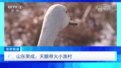 《生财有道》 20200310 山东荣成:天鹅带火小渔村