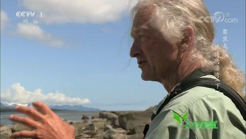 《人与自然》 20200402 聚焦大熊——沸腾的海湾(下)