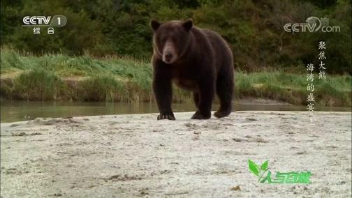 《人与自然》 20200403 聚焦大熊——海湾的盛宴(上)