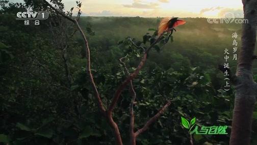 《人与自然》 20200427 海岛岁月——火中诞生(上)