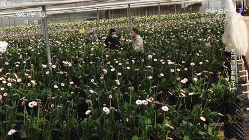 《创新进行时》 20200428 我在直播卖鲜花(一)