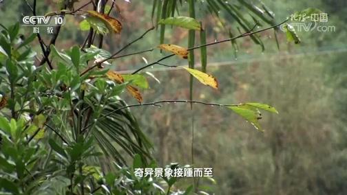 """《地理·中国》 20200521 会""""打雷""""的山洞"""