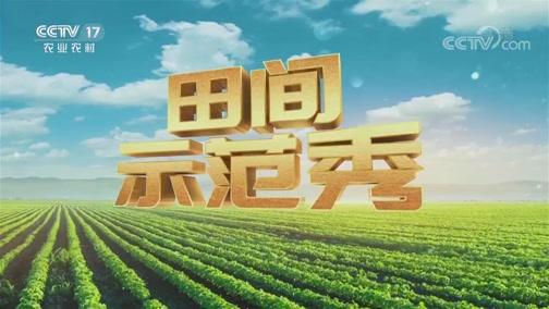 《田间示范秀》 20200602 百变芦笋的奥秘