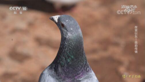 《跟着书本去旅行》 20200724 故宫以东——鸽韵传情