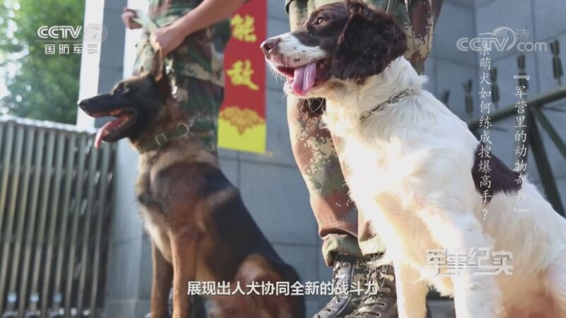 《军事纪实》 20200828 军营里的动物奇兵