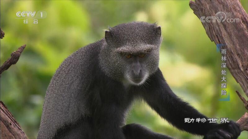 《动物世界》 20200913 雨林深处大探险