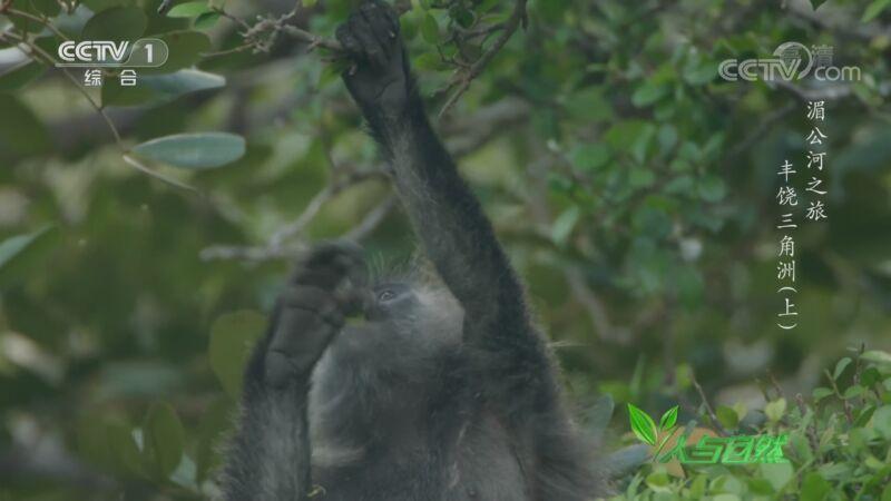 《人与自然》 20201003 湄公河之旅——丰饶三角洲(上)