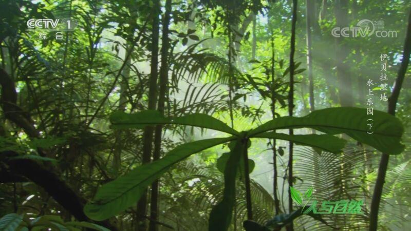 《人与自然》 20201020 伊贝拉湿地——水上乐园(下)