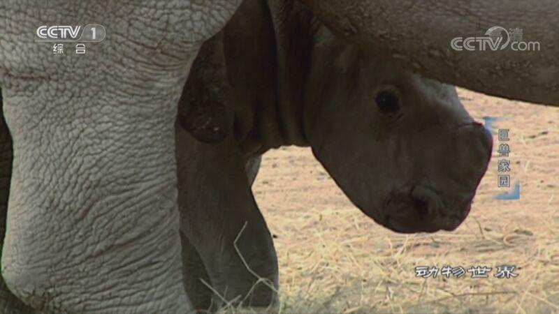 《动物世界》 20201030 巨兽家园