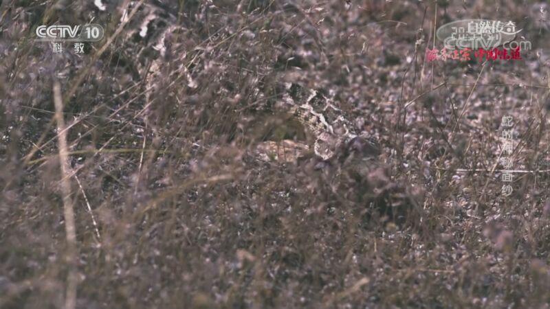 《自然传奇》 20201106 蛇的神秘面纱