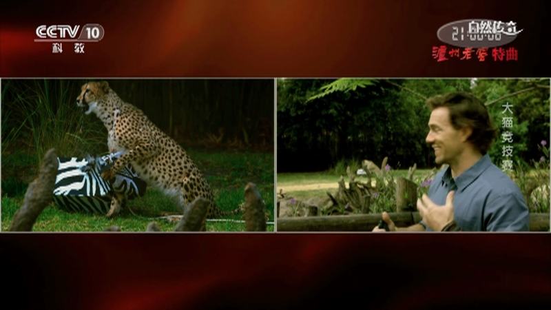 《自然传奇》 20210107 大猫竞技赛