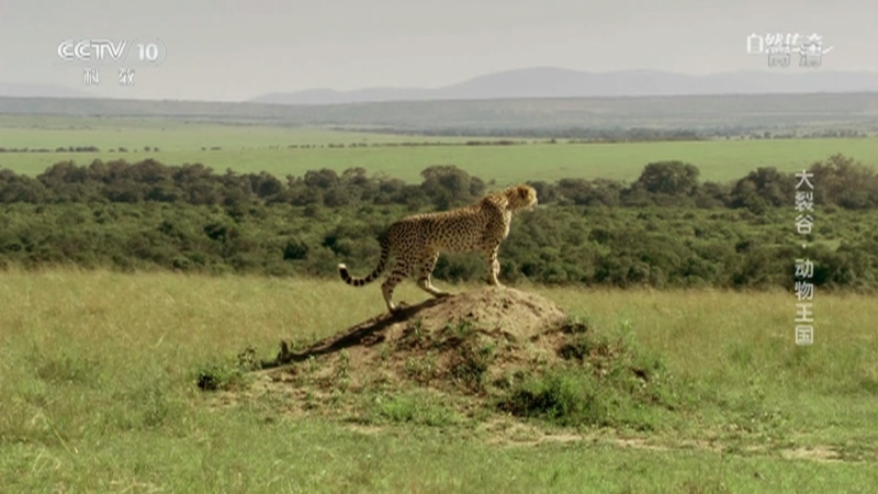 《自然传奇》 20210112 大裂谷·动物王国