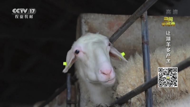 《田间示范秀》 20210201 让湖羊多产羔