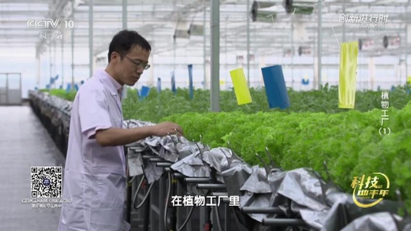 《创新进行时》 20210216 科技助丰年·植物工厂(1)
