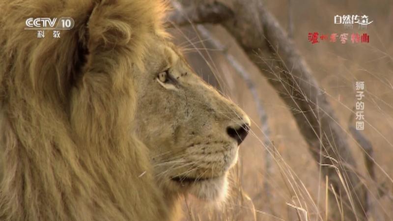 《自然传奇》 20210326 狮子的乐园