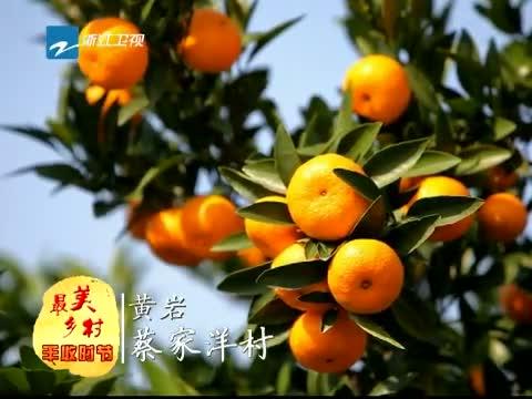 [浙江新闻联播]特别策划:到最美乡村 享受丰收时节 20131119