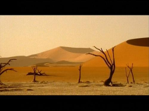 狂野非洲——沙漠世界