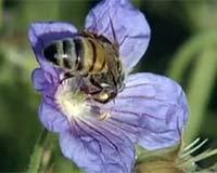 探秘崛起的黑蜂产业