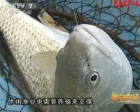 百元一公斤的美国红鱼