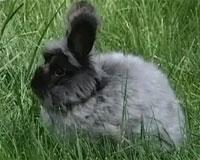 长毛兔赚钱的门道