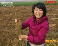农产品地下掘金