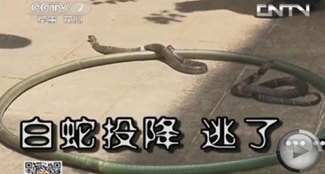 暑期对抗:蛇乡会蛇(1)