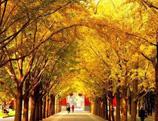 Chine : les parcs à l'automne