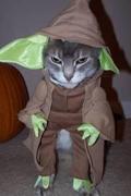 可爱猫咪激情演绎《星球大战》激光剑