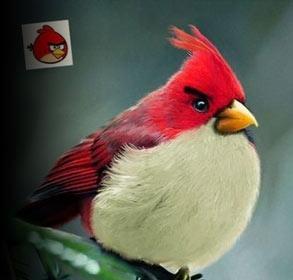 印度艺术家创作出《愤怒的小鸟》真鸟版