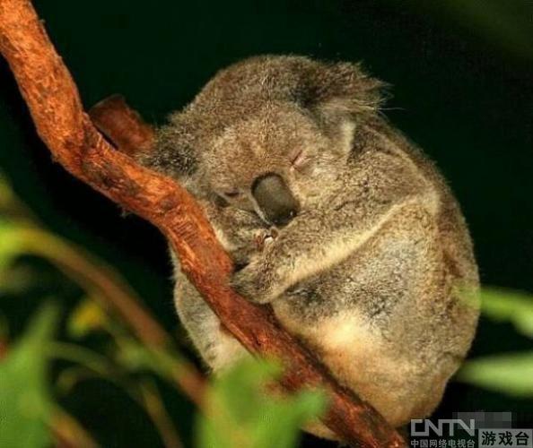 世界睡眠日:超治愈的小动物可爱睡相