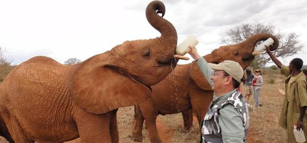 东非野生动物大迁徙现场